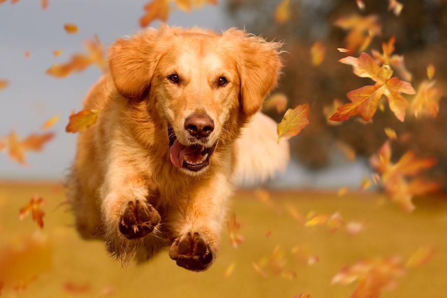 Znanost o psećim osjećajima: Što se krije iza osjećaja pasa?
