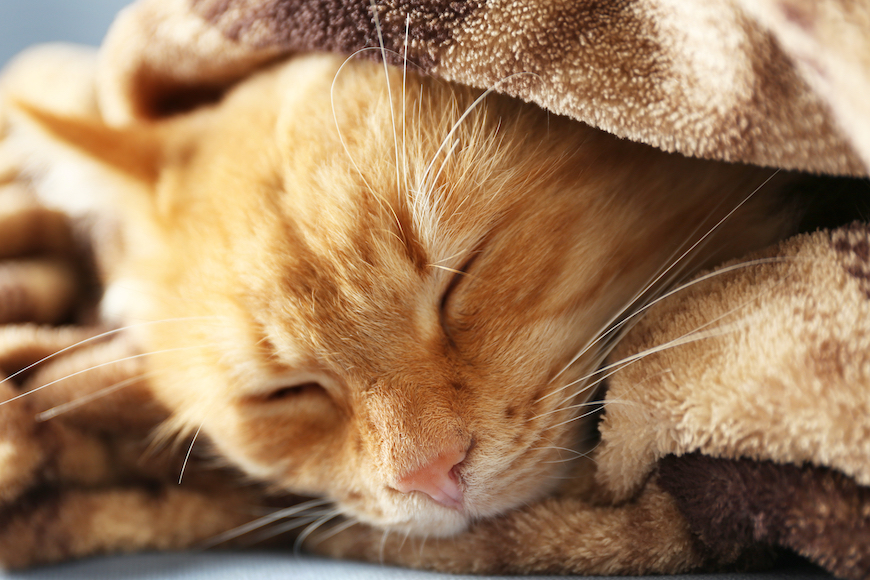 Mačka – kućni ljubimac
