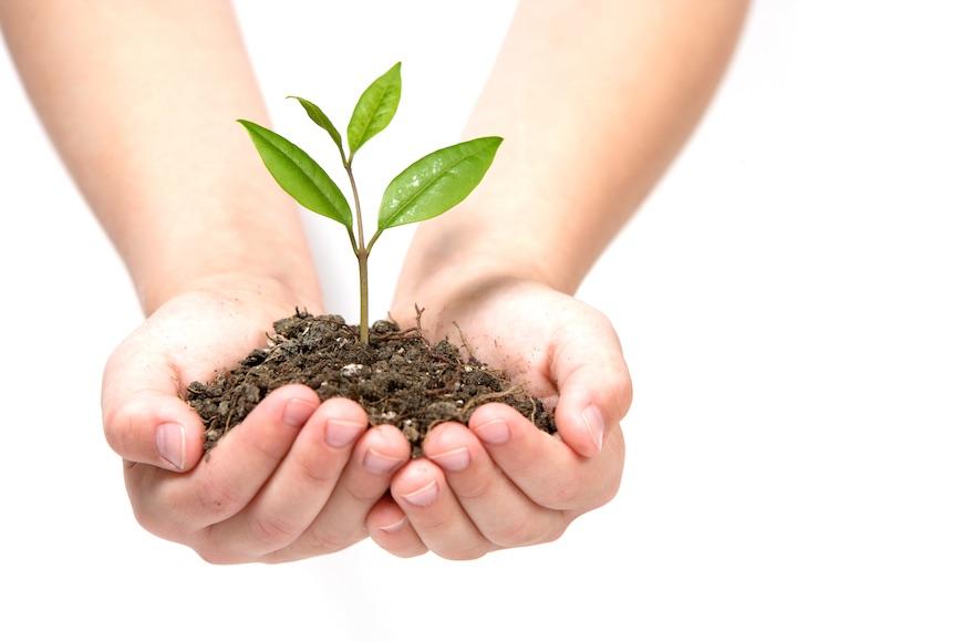 zemlja i biljka u rukama