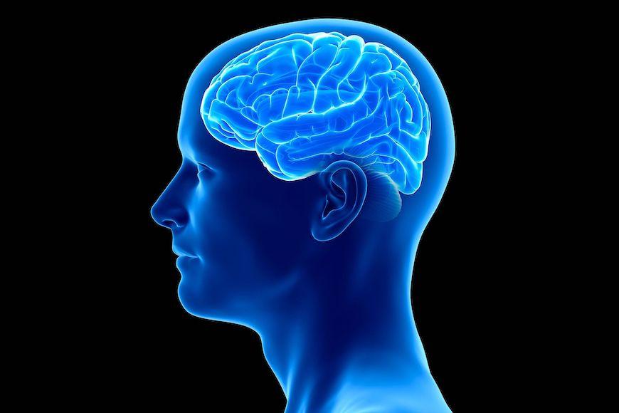 Zanimljive činjenice o mozgu
