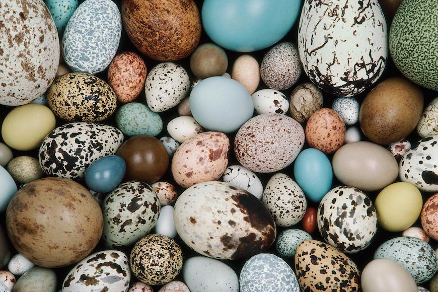 Zašto ptice liježu jaja različitih oblika