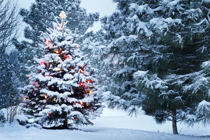 bor u snijegu s lampicama