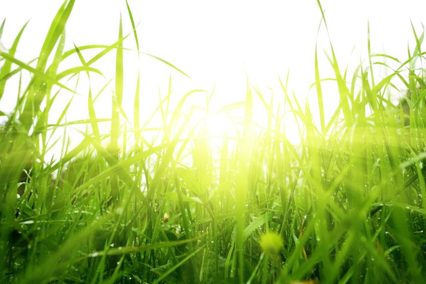 """Projekt """"Učeničke akcije u borbi protiv klimatskih promjena – Zelenije sutra"""""""