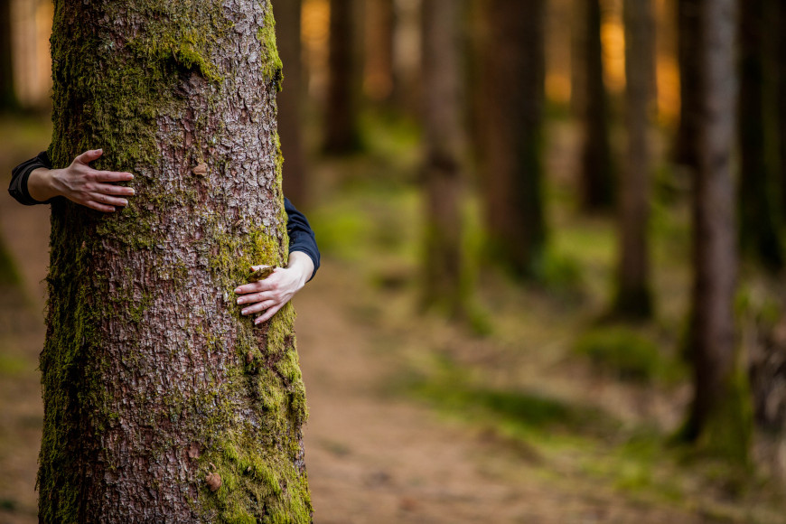 Božićni eko-izazov: Budi svjestan stvor, spasi jelku ili bor