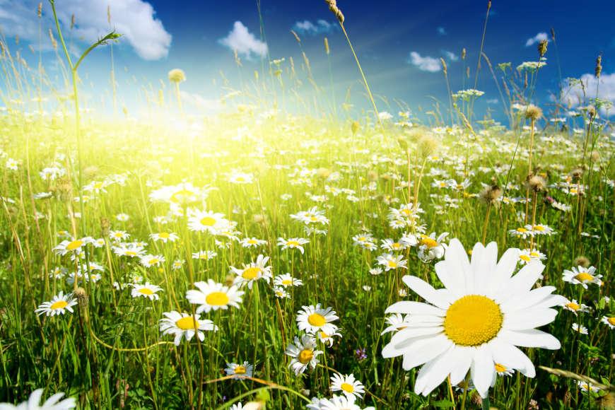 Pozdrav proljeću i Svjetski dan kazališta