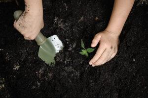 dijete sadi biljku