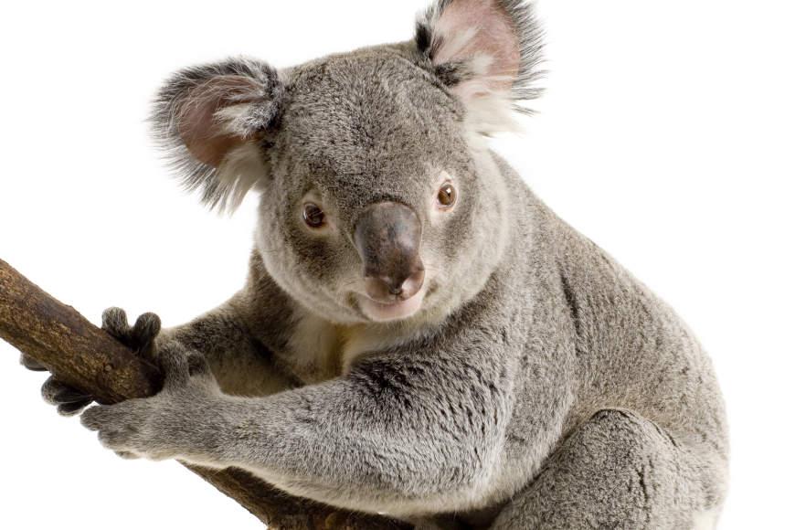 Australija u Zoo vrtu grada Zagreba