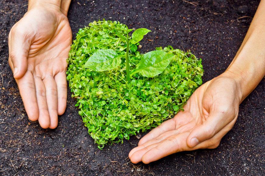 ruke na zemlji i posađeno u bilje u obliku srca
