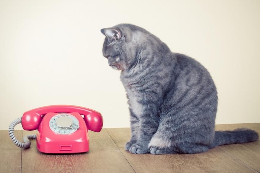 mačka kraj telefona